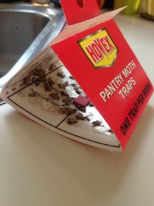 Piss off a pantry moth with a Pantry Moth Trap